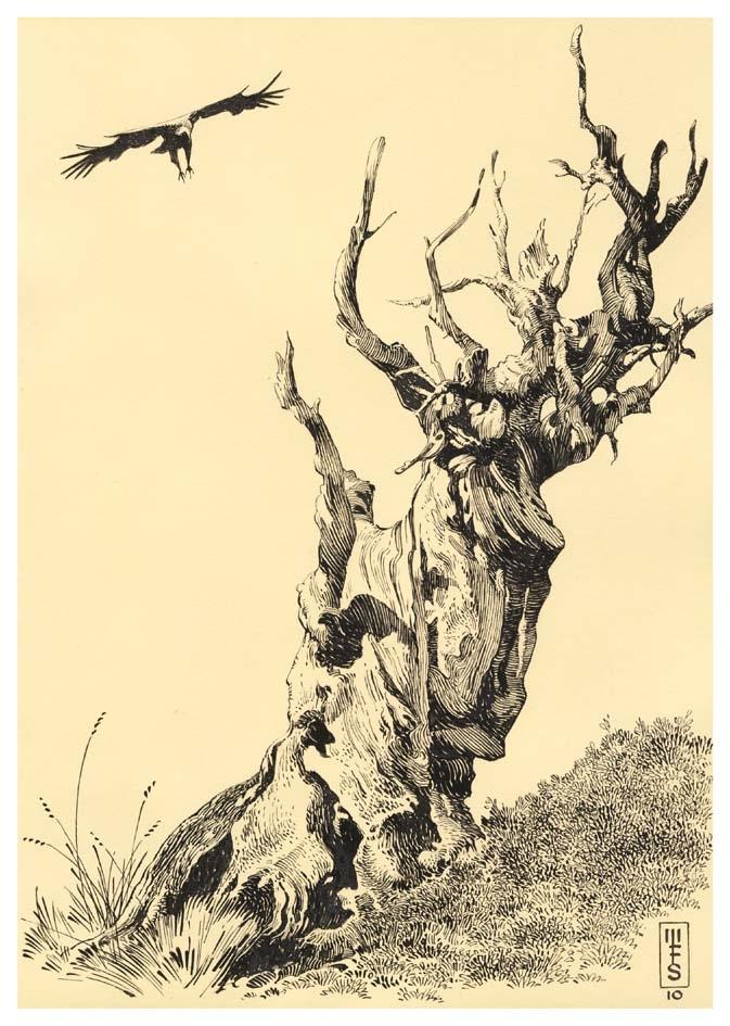 Vultures Perch